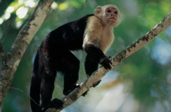 thenewcostarica.boldmagazine.monkey