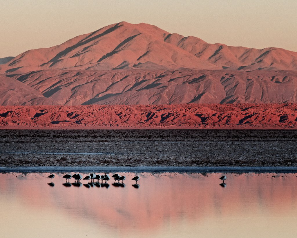 Salar de Atacama. Image by Mike Green.