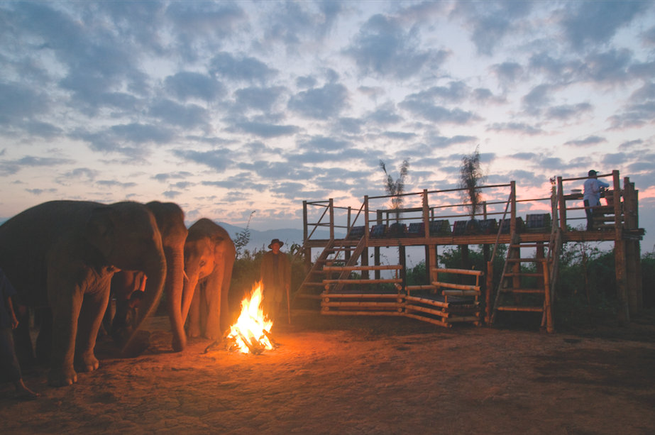 Four Seasons Elephants - BOLDmagazine