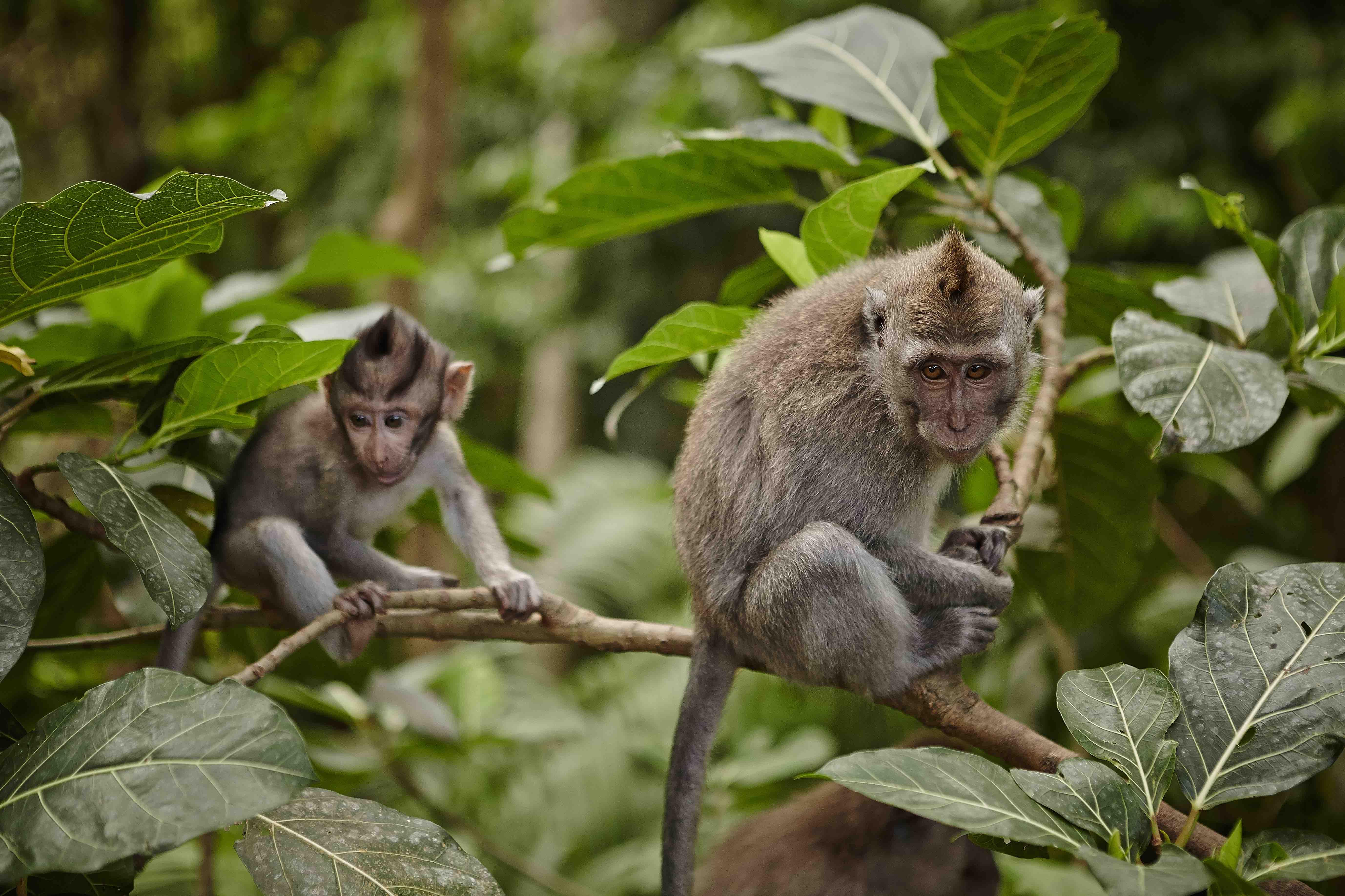 Monkey Forest, Ubud - Bali
