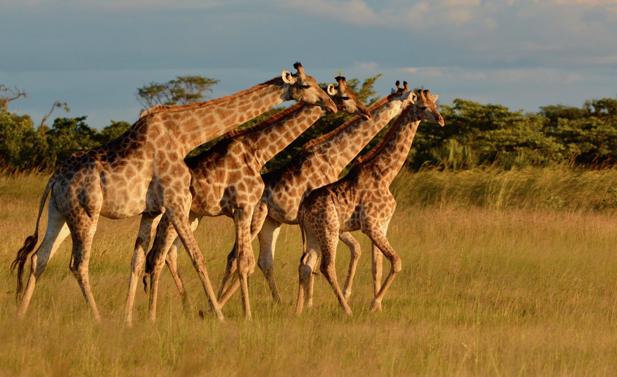 6. Botswana<br />