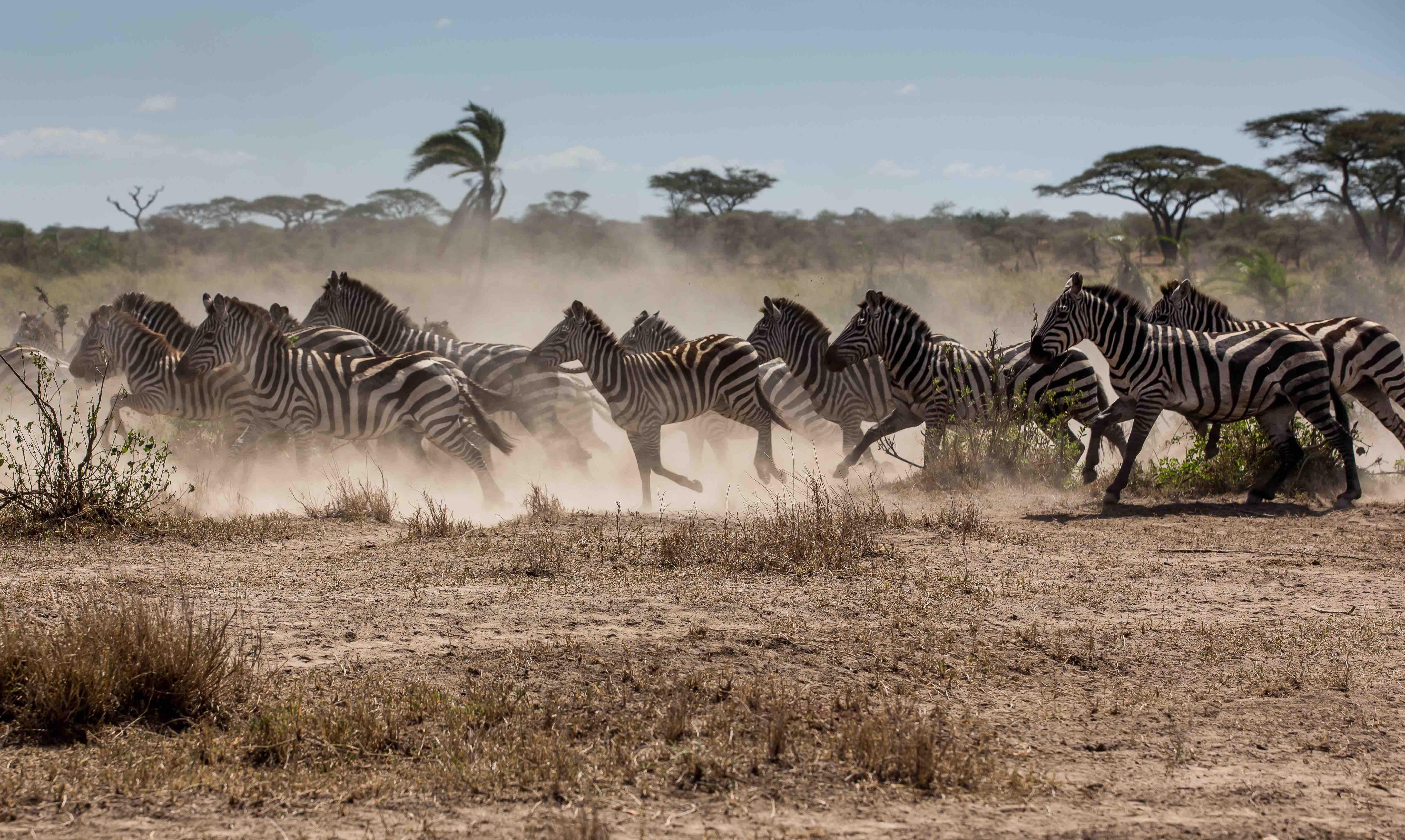 10. Kenya