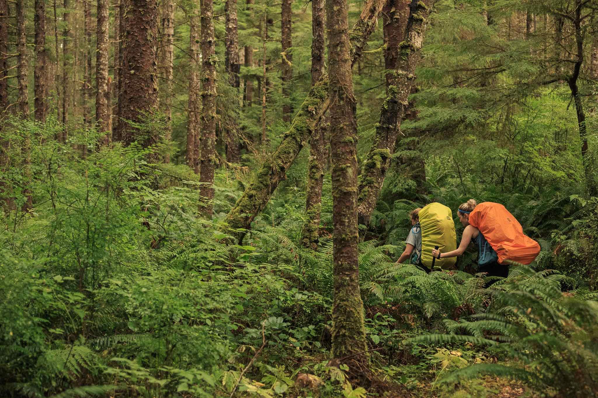 BECOME A TREE HUGGER