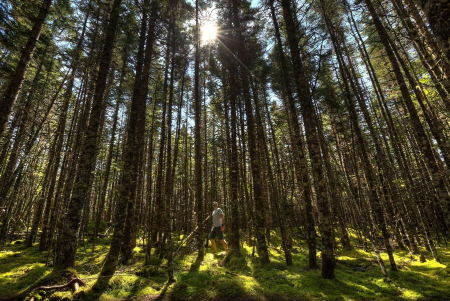 6. Walking in the woods is good for your physical well-being