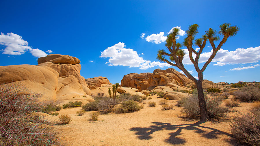 10. Experience captivating desert landscapes and great national parks <br />